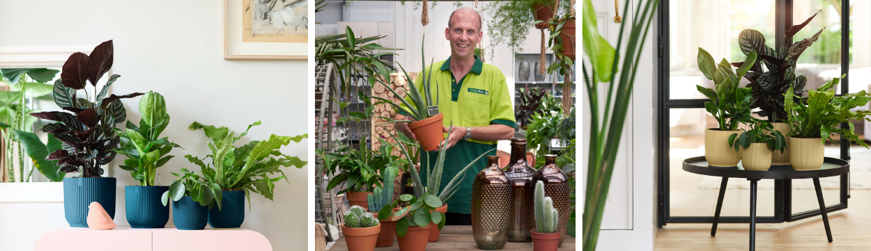 Online kamerplanten de tuinwinkel