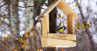 Tuinvogels vogelhuisjes en voer de tuinwinkel online tuincentrum