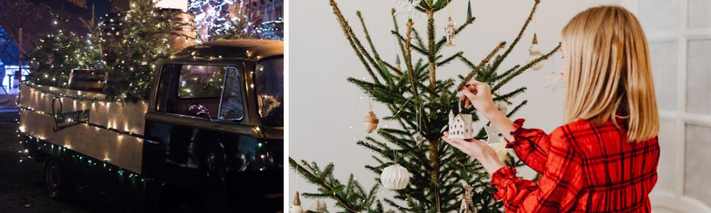 Echte kerstbomen kopen